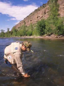 Fishing although the gila wilderness is generally an arid for Gila river fishing